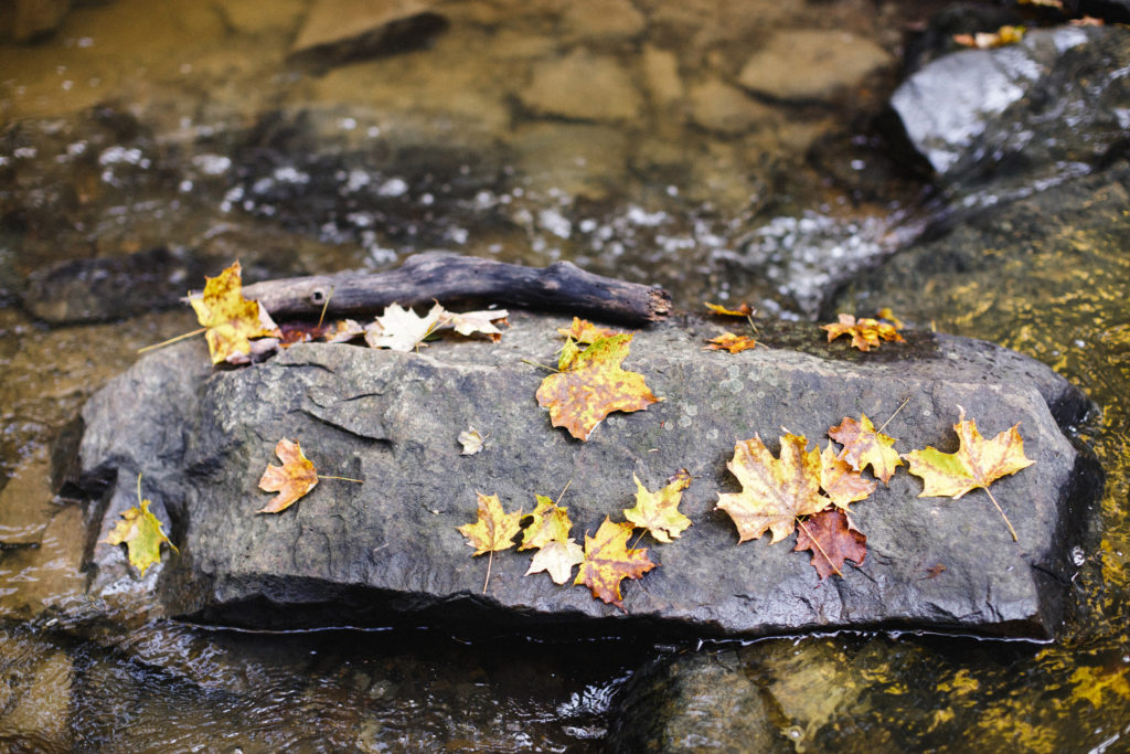 detail of autumn in Niagara on the bruce trail