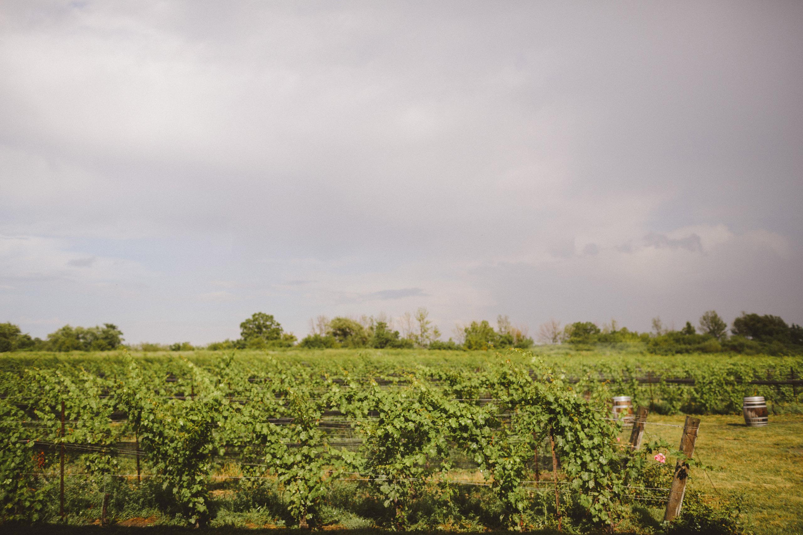 southbook vineyard grapes field sunset