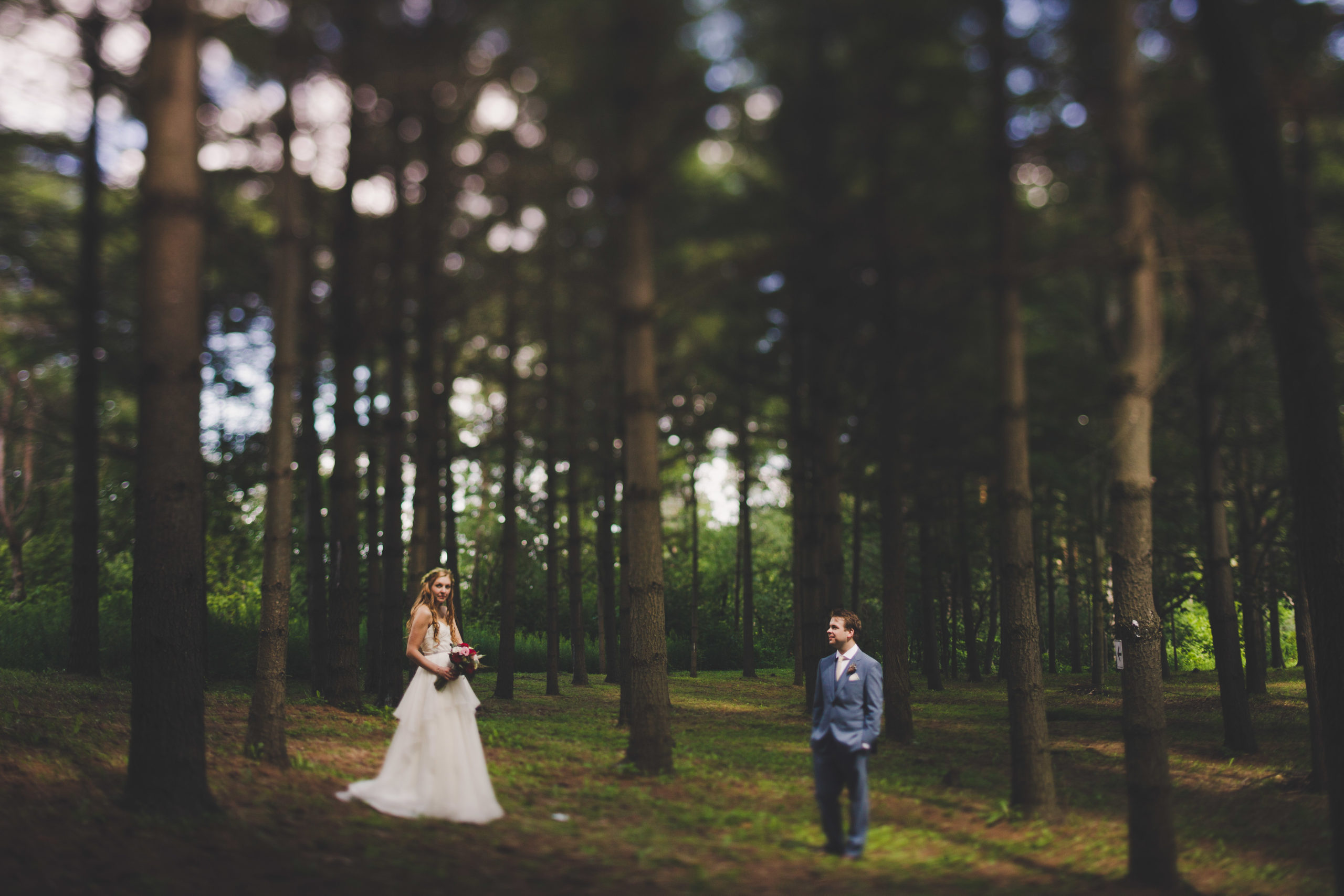 Bride groom wedding forest trees