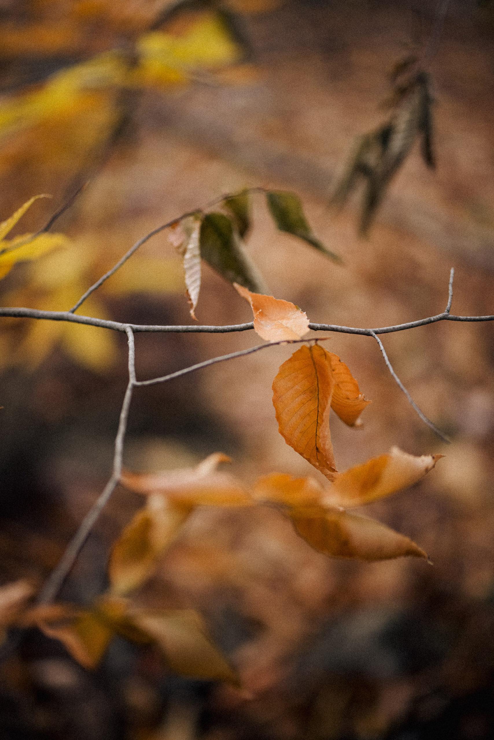 autumn leaves niagara