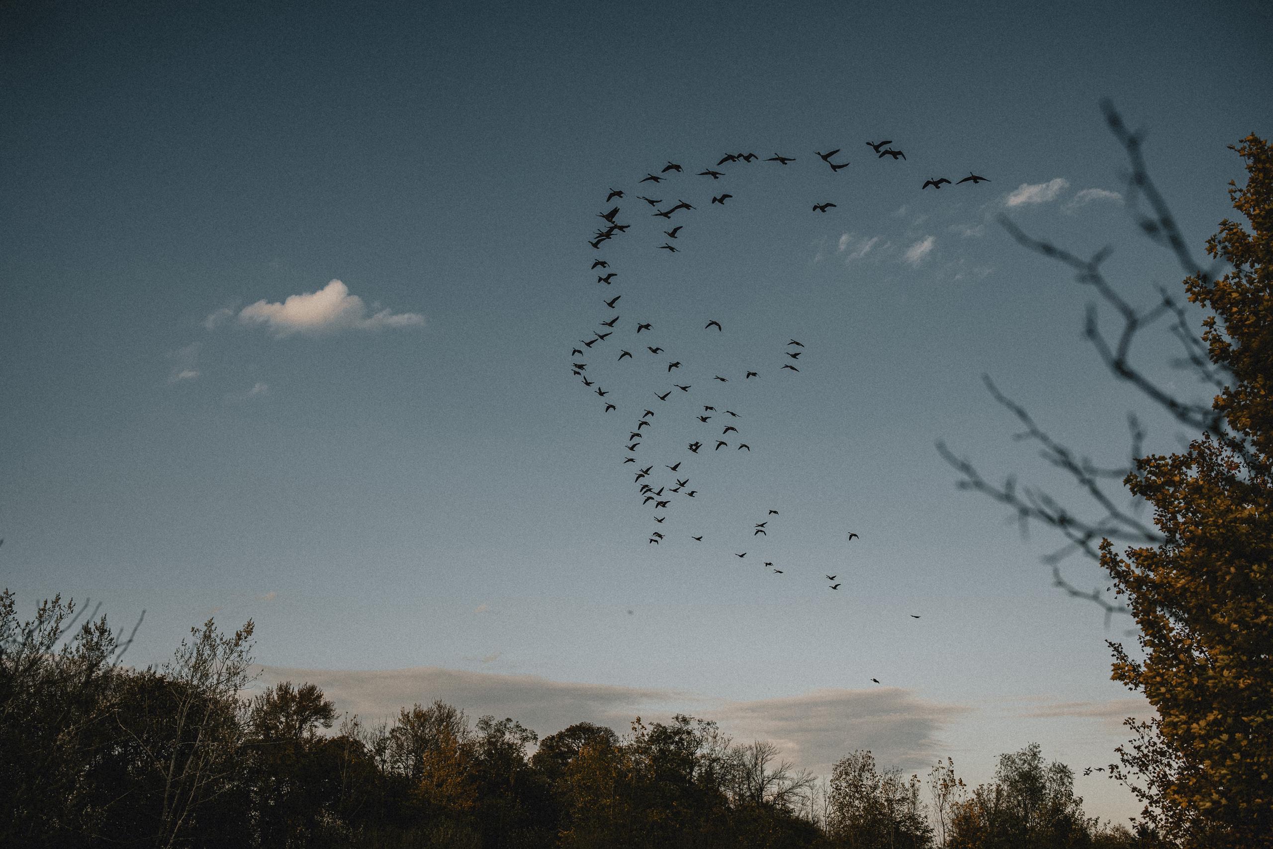 geese flying south in sky niagara maternity shoot